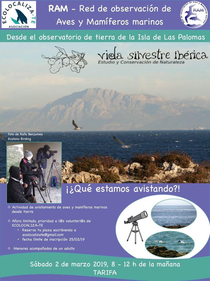 Observacion_cetaceos_desde_tierra