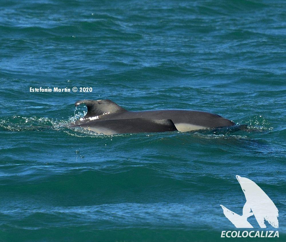 historias-reales-delfines-bahia-algeciras